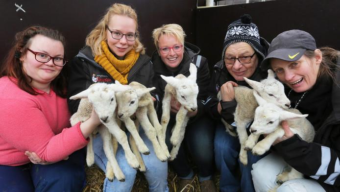 Cliënten en medewerkers van zorgboerderij TokHok uit Arnhem zijn trots op de vijfling die geboren is.