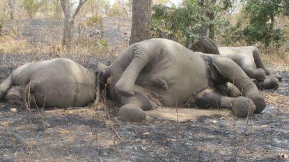 Stropers vermoorden zes militairen en twee burgers in Kameroens natuurpark