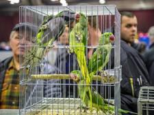 """Organisatie vogelbeurs: """"Wij controleren zo veel mogelijk"""""""