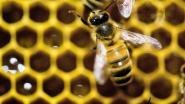 Oudenburg investeert in bijen: extra bloemen, bijenhotels en beter bermbeheer