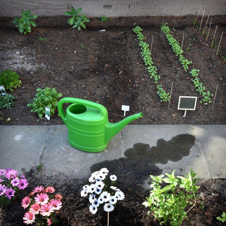 Een tuintje waar cliënten van een ggz-instelling in Tilburg voor zorgen. Beeld Hollandse Hoogte