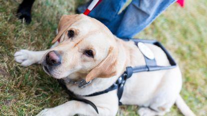 Blinde hardloper loopt halve marathon van New York uit met drie blindengeleidehonden