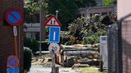 Bomen in Schijfstraat gekapt nog voor protestactie