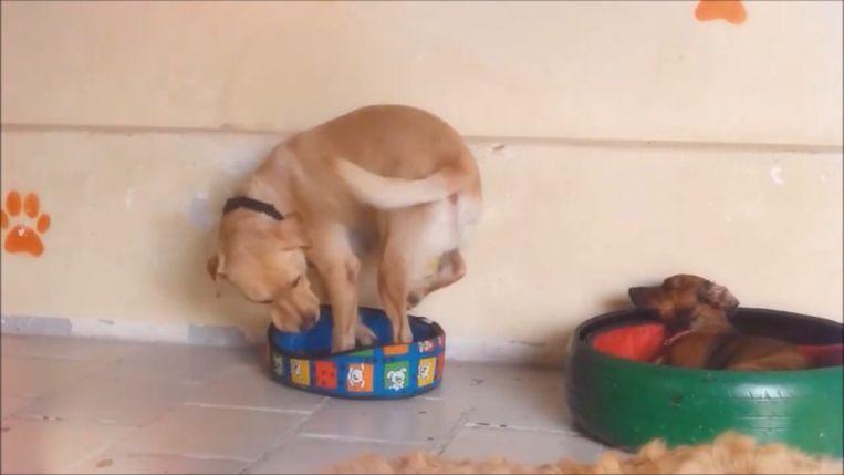 Hond mandje.