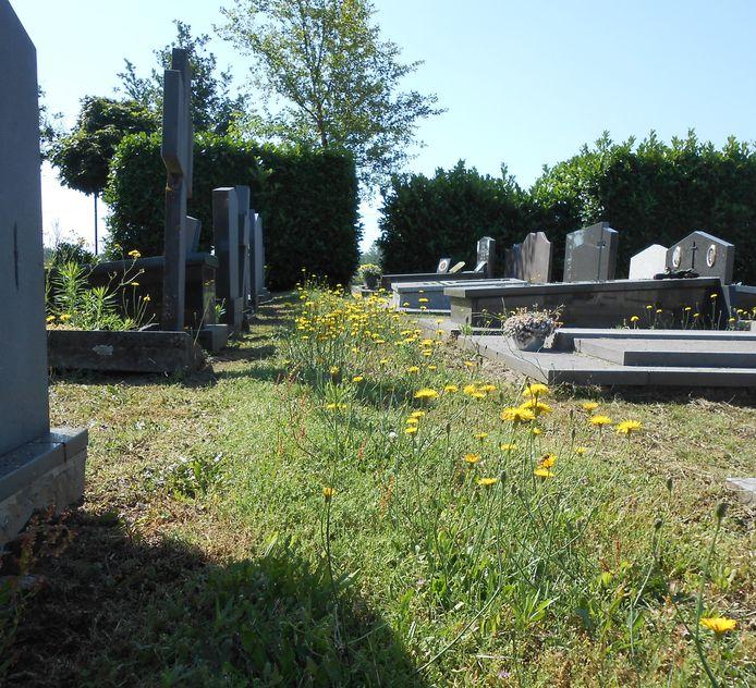 De begraafplaats van Oosteeklo: slordig volgens de een, goed voor de natuur volgens de ander.