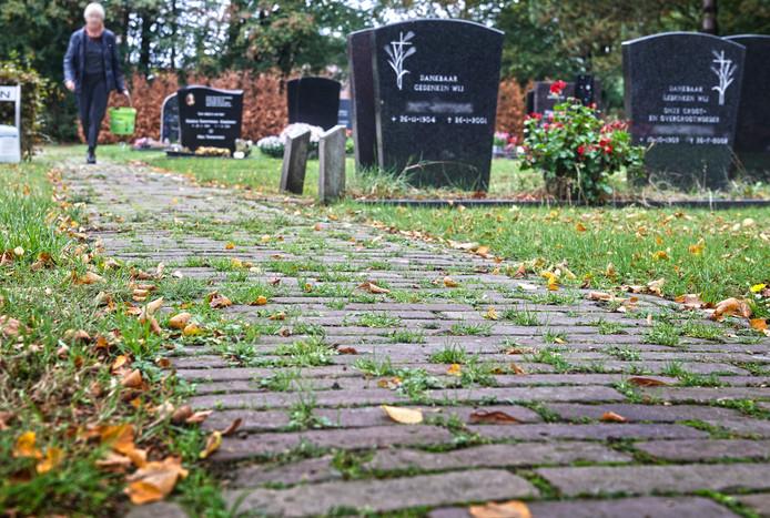 Begraafplaats 't Loo in Nistelrode is slecht onderhouden.  Veel onkruid en in de achtergrond dode coniferen. Fotograaf: Van Assendelft/Jeroen Appels