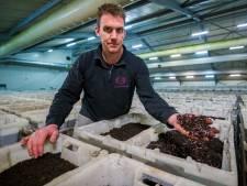 Wormenkwekerij wil onder de grond: 'Boven de 24 graden gaan de dieren dood'