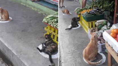 Katten geven goede voorbeeld: zo doe je aan social distancing