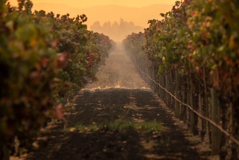 Het vuur verwoest grote delen van de wijngaarden in en rond Geyserville.