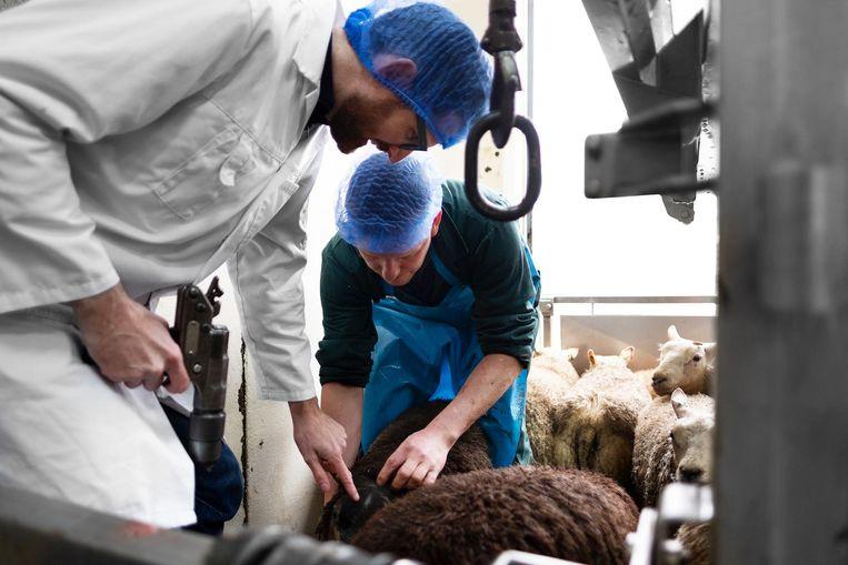 Het varken en het lam werden tijdens een diner voor vrienden en familie opgepeuzeld Beeld David de Jong en Tim Stet