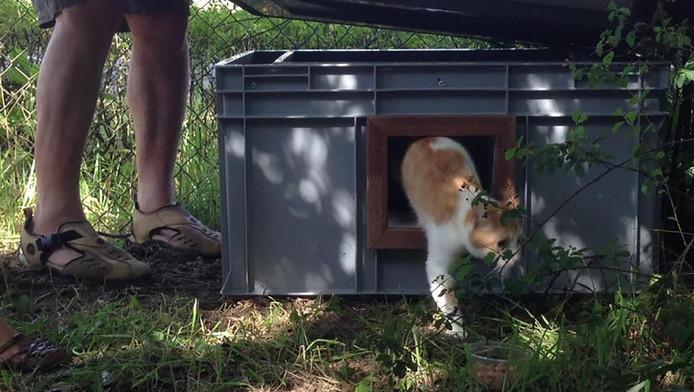 De katten moeten het ongedierte in de gevangenis verjagen