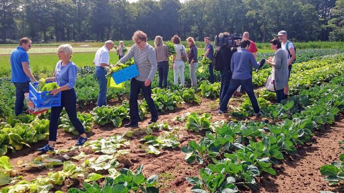 Oogsten op de Herenboerderij in Boxtel. In Breda zijn plannen voor een soortgelijke boerderij.