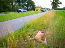 Steeds meer wild doodgereden: schade in miljoenen met meer dan tienduizend aanrijdingen per jaar