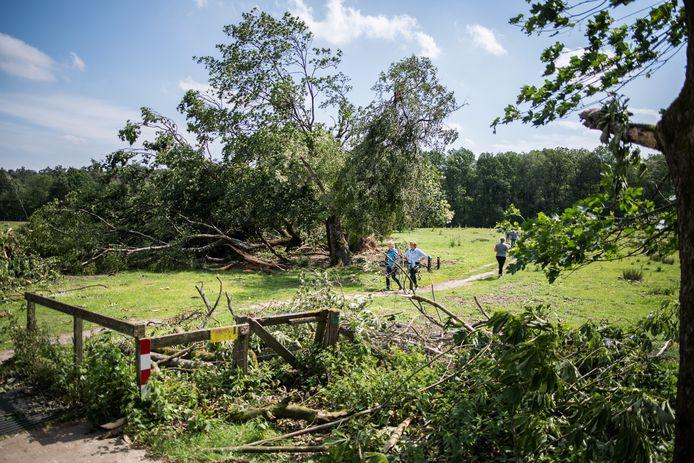 Omgevallen bomen en afgewaaide takken op de Posbank.
