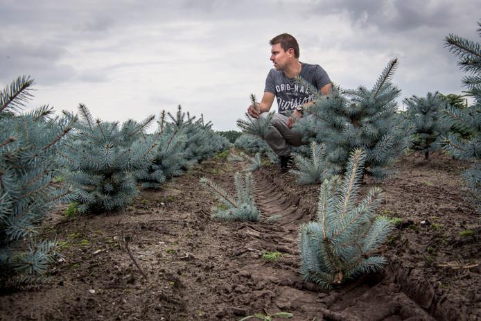 Mark van den Oever treurt te midden van zijn vernielde bomen.