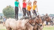 Paardenshow blikvanger op jubilerende Kriekefeesten