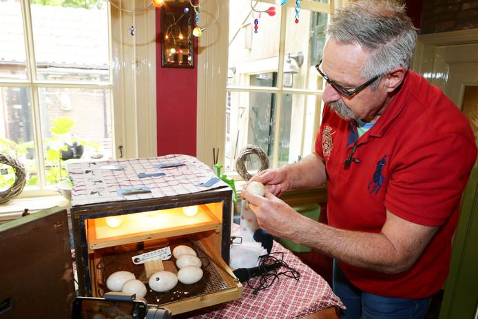 Verzorger Pieter van Andel bij de eieren