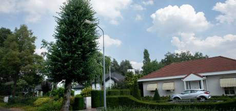 De familie Van Kessel wil dat de boom voor hun deur wordt omgezaagd, maar de gemeente laat 'm staan