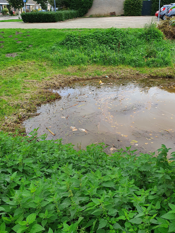 In een vijver bij de Regentendam zijn dode vissen aangetroffen.
