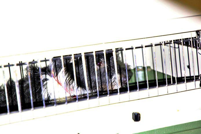 De hond die in een bench achterin de bestelwagen zat bleef ongedeerd