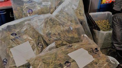 Vangst van politiezone Regio Puyenbroeck in 2018: 9 kilo cannabis, 457 planten, 1 kilo crystal meth en bijna 1.000 pillen