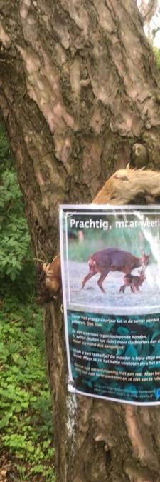Opnieuw afgehakte dierenpoot gevonden: 'Waarom doet iemand zoiets?'