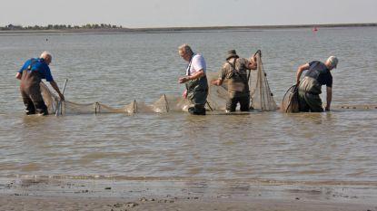 Steeds meer vis in de Schelde