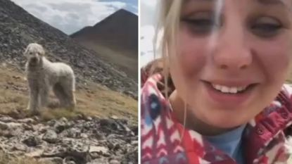 Hond wordt bij zwaar ongeval uit auto geslingerd. Drie weken later vinden ze hem terug op bergtop en vloeien er tranen van geluk