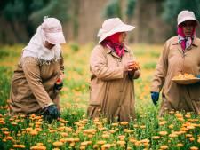 <br>Les jardins de l'Ourika à Marrakech: là où Yves Saint Laurent puise ses secrets de beauté