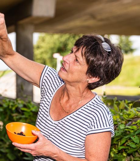 Wie meer dan 250 gram aan bramen en bessen plukt, riskeert een prent van 104 euro