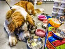 Huisdieren uit Mijdrecht mogen hun voerbak achterlaten voor de goedheiligman