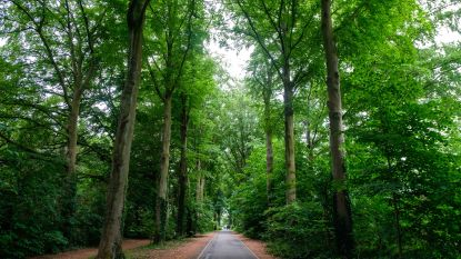Ontwortelde en verzwakte bomen: gemeentebestuur overlegt met eigenaars en andere partijen over toekomst iconische dreef