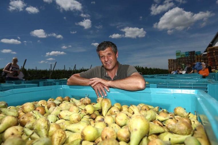 """Karel Paesmans gaf in juni nog 50.000 kilo peren gratis weg: """"Liever dit dan ze naar de kop van politici gooien"""""""