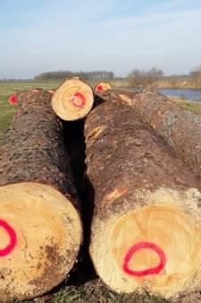 Vechtdal grijpt terug op eeuwenoude methode voor beter hout