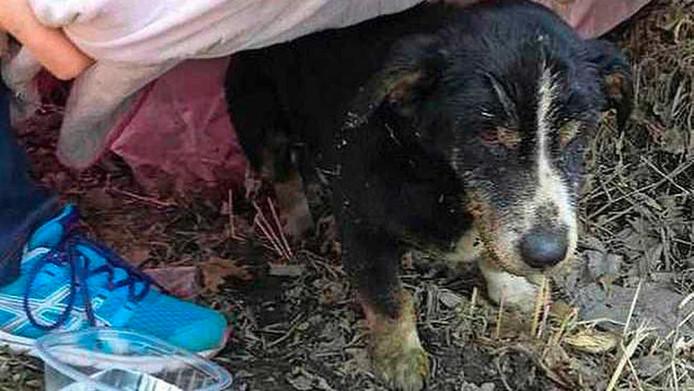 Hond Dik werd levend begraven door zijn baasje.