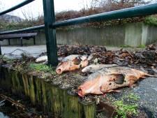 Vissen 'mishandeld en gedood' door roekeloos maaien