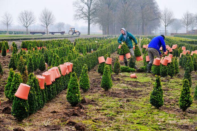 Problemen zijn er onder meer met het feit dat Haaren in het nieuwe plan toestaat dat er op agrarische bedrijven gedurende negen maanden per jaar 25 seizoensarbeiders gehuisvest mogen zijn.