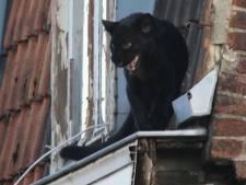 Opmerkelijke beelden: zwarte panter wandelt over Franse daken