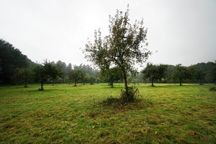 Door een slecht seizoen is de Elshof in Malden nu een boomgaard zonder appels.