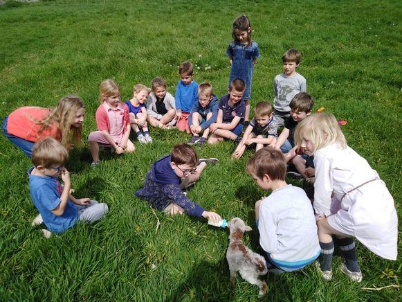 De kinderen mochten heel even bij de piepkleine lammetjes.