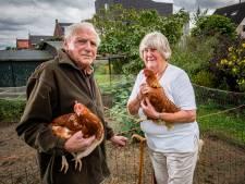 Vandalen traumatiseren kippen in Brummen: 'Ze hebben ze met kalkeieren bekogeld'