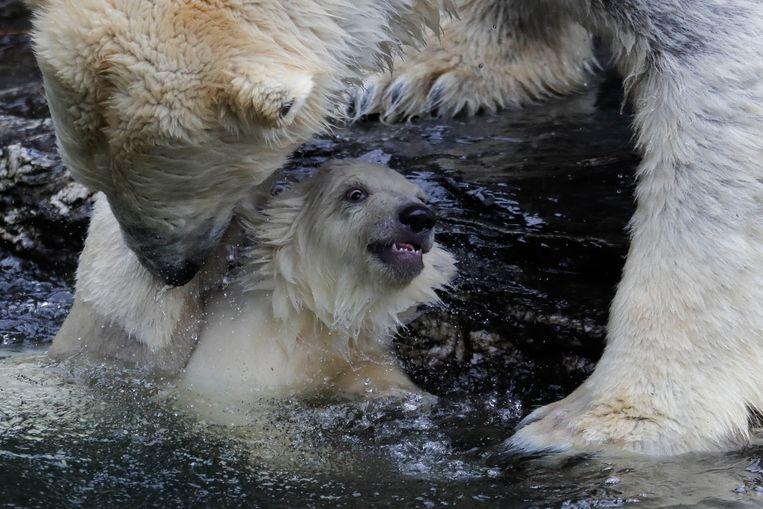 Tonja helpt haar welpje uit het water te geraken.