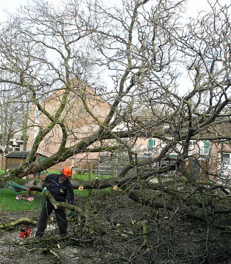 Extreme stormschade in Lochem