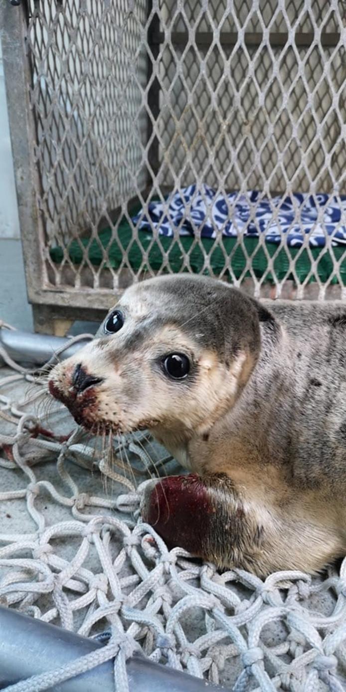 Une autopsie sera réalisée pour déterminer si la mort du phoque est liée aux coups reçus ou à une maladie dont l'animal semblait porteur