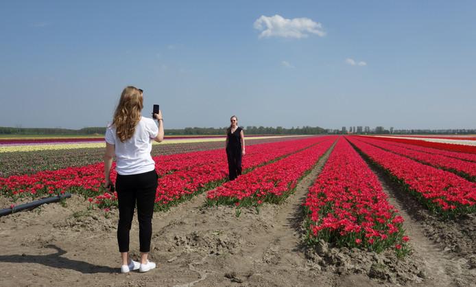 Langs de Tulpenroute in Dronten wordt veelvuldig geposeerd voor een foto.