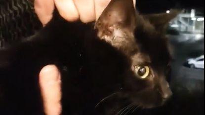 Hallucinante video: dronken student gooit kat van residentie in Kortrijk