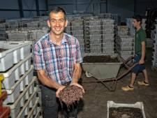 Hoe wormen Pieter Langelaar slapeloze nachten bezorgden