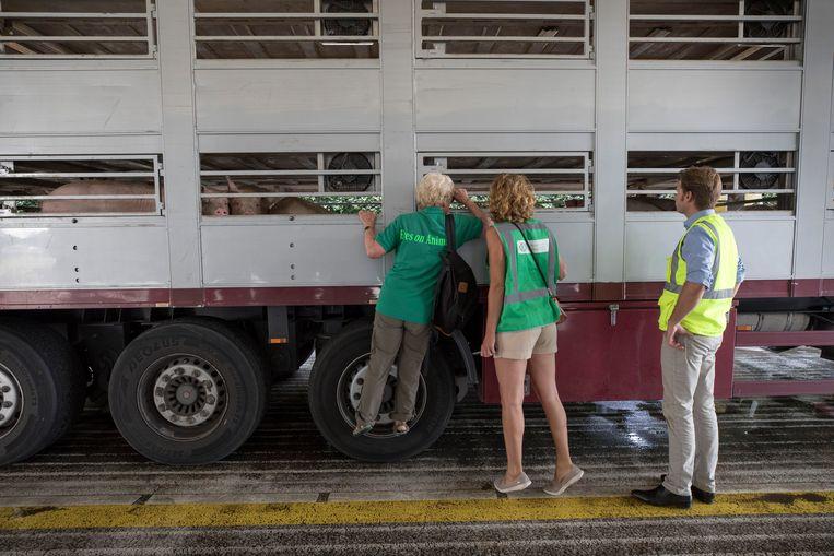 Margreet Steendijk (links) en Lesley Moffat inspecteren een van de wachtende vrachtwagens bij slachterij Vion in Boxtel, onder toeziend oog van Hugo Pol van Vion. Beeld Werry Crone
