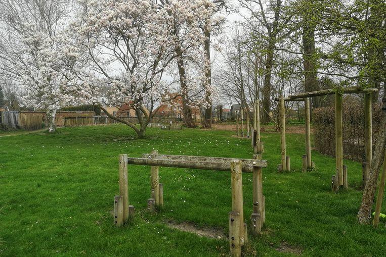 In de schooltuin staan de magnolia's in bloei.