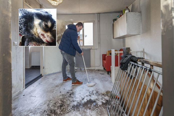 Hondje Kaylie van Lourens DInkelberg overleed aan de verwondingen die ze opliep als gevolg van de aangestoken brand in Zwolle.